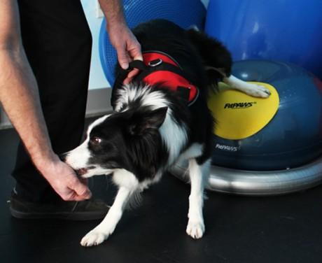 Fitpaws Uk Dog Training Equipment