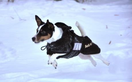 Back on Track Dog Coat