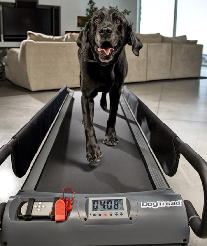 Dogtread Canine Treadmills Uk Fitness Equipment For Dogs