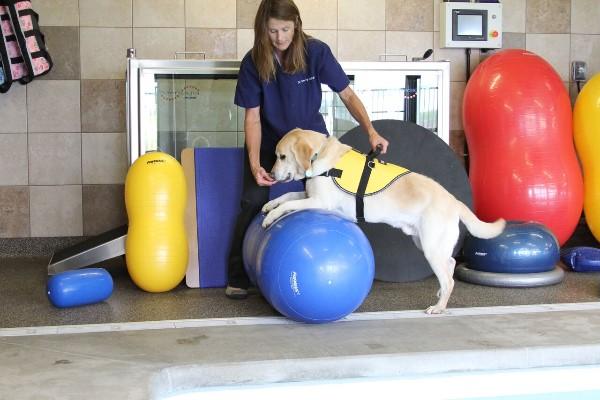 Fitpaws Peanut Dog Training Equipment