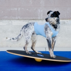 FitPAWS Giant Wobble Board